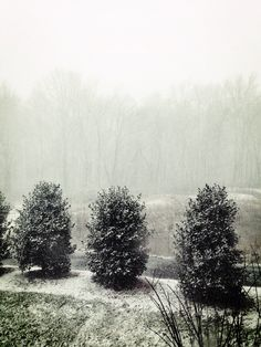 Snow fall on the preserve