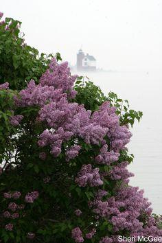 Mackinaw Island - lilacs and lighthouse on a foggy morning Love scented lilacs Mackinac Island Michigan, Michigan Travel, Lake Michigan, Places To Travel, Places To See, Beautiful World, Beautiful Places, Mackinaw City, Mackinac Bridge