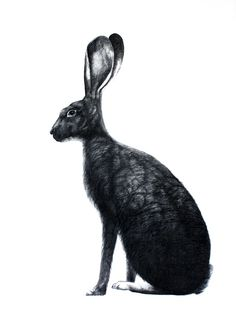 black rabbits aren't like black cats, they aren't bad luck. so make sure you feed them food!
