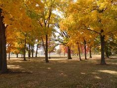 Fall in Appleton, WI.  Beautiful display of colors.  Erb Park.