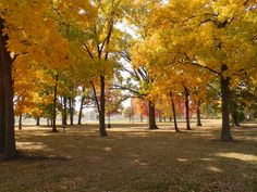 Fall in Appleton, WI.  Beautiful display of colors.  Erb Park.