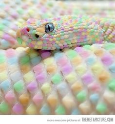 Easter snake, even though i hate snakes this one is cool