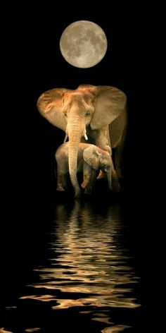 Welcome To The Eminent Elephant Celebrating the most renowned creature on Earth. Shop Elephant apparel & accessories for yourself or for great gifts. Perfect for all of the Elephant Lovers in your life. Elephant Love, Elephant Art, Mama Elephant, African Elephant, Elephant Quotes, Elephant Poster, Elephant Images, Elephant Pictures, Elephant Family