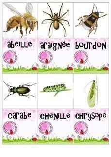 Mémory des petites bêtes du jardin - Fiches de préparations (cycle1-cycle 2-CLIS)