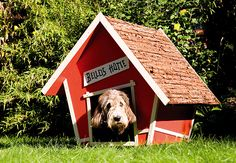 Hundeblockhütte
