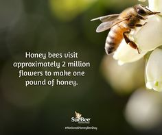 National Honey Bee Day Million Flowers, Save The Bees, Bee Keeping, Honey, How To Make, Blessed, Gardening, Lawn And Garden, Horticulture