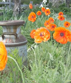 See the Beauty in the Ordinary: A Kansas Country Garden - Third Week of April