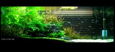 planted aquarium with sand - Google Search