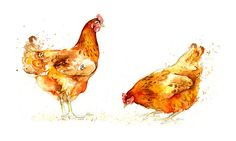 Hens II and III by Amy Holliday, via Flickr Just like my girls
