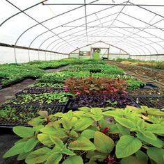 Expert Advice on Greenhouse Growing - Organic Gardening - MOTHER EARTH NEWS