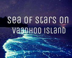 Sea of Stars, Vaadhoo Island, Maldives Visit Maldives, Maldives Resort, Maldives Travel, Sea Of Stars, Under The Stars, Places To Travel, Places To See, Maldives Destinations, Travel Destinations