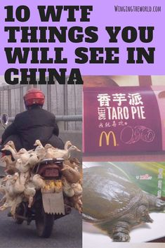 China is a destination unlike any other and seeing really is believing. Ducks strapped to mopeds, turtles for dinner, WTF China? #DestinationChina
