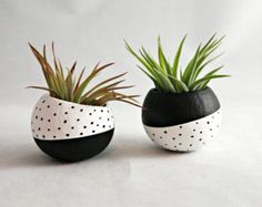 Air Plant Pod Inverse Set // Black White Spots (with Air Plants) USD) by seaandasters Air Plants, Potted Plants, Indoor Plants, Cactus Plants, Painted Plant Pots, Painted Flower Pots, Ceramic Plant Pots, Pottery Painting, Ceramic Painting