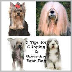 More pet grooming facebook page templates groomers advertising cowboy magic grooming products dog articles archives page 3 of 3 cowboy magic grooming products solutioingenieria Images