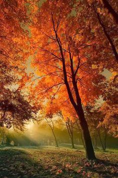 Autumn's glow....