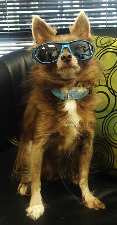 Today is National Sunglasses Day and about office pup, Jefe, is celebrating by wearing his favorite shades. Click here to learn important facts about UV protection for your eyes.