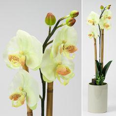 Vaso com Orquídea Branca 66 x 25 cm | A Loja do Gato Preto | #alojadogatopreto | #shoponline | referência 70963174