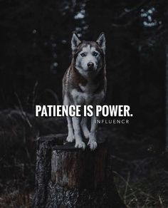 Patience is power. Snap Quotes, Motivational Posts, Youth Club, Quote Of The Day, Wolves, Mental Health, Positivity, Phrase Of The Day, Day Quotes
