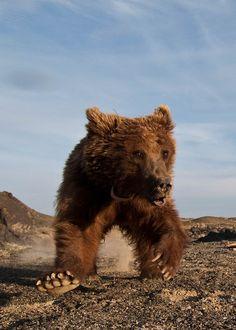 Can World's Rarest Bear Be Saved?
