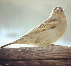 """""""Osservate attentamente gli uccelli del cielo, perché essi non seminano né mietono né raccolgono in depositi; eppure il vostro Padre celeste li nutre. Non valete voi più di loro?"""" - Matteo 6:26"""