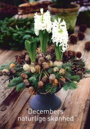 """""""Natural beauty of December"""", by munkhus.com, article in danish gardening magazine """"Haven"""", dec. 2010"""