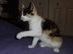 Scrambles - a 10 week old kitten rescued from the side of the road with her brother, Pirate.  Thanks to the Greater Victoria Animal Crusaders, Scrambles and her brother are now in a loving forever home :)