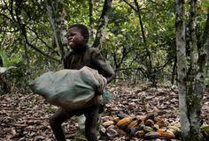 I bambini schiavi del cacao