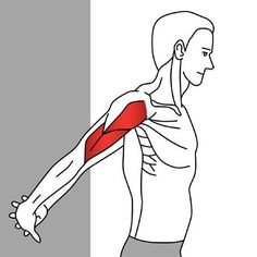Stretching the Anterior Deltoid - Stuart Hinds Trigger Points for Trainers Trigger Points for Therapists The deltoid, along with supraspinatus and asso Neck And Shoulder Stretches, Neck And Shoulder Exercises, Neck Exercises, Neck And Shoulder Pain, Shoulder Muscles, Shoulder Workout, Stretching Exercises, Shoulder Tension, Neck Stretches
