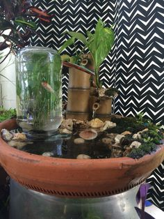 Diy mini moss pond with elevated fish habitat.