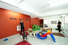 for a smaller space indoor Dog Play Room, Puppy Room, Dog Rooms, Chinchilla, Puppy Playground, Playground Ideas, Dog Grooming Salons, Grooming Shop, Pet Grooming