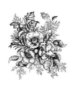 Botanical Illustration on Drawing Served