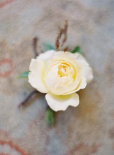 Gallery & Inspiration | Tag - Boutonniere | Picture - 1360238
