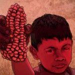 No se volverá a usar maíz transgénico, al menos en Oaxaca: SAGARPA