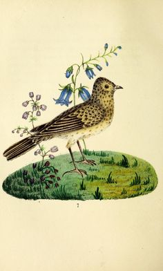 The language of birds : London :Saunders and Otley,1837.
