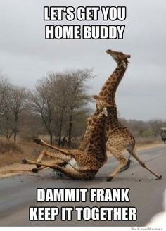 Go home giraffe, you are drunk!