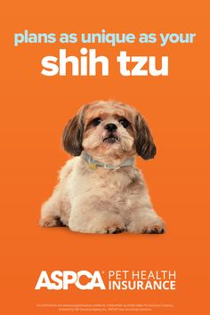 Every breed has different health needs. ASPCA Pet Health Insurance plans were designed with the needs of Shih Tzus in mind. Return to your quote today to view customized plan options for your pet. Health Insurance Plans, Pet Insurance, Health Care Coverage, Shih Tzus, Dog Lovers, Dog Cat, Quote, Pets, Fun