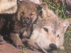For Brittney and Grayson   (a Gray Wolf pup for your Gray Woolf pup)