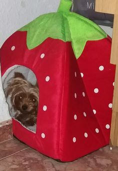 Soft Leopard And Strawberry House For Small Dogs – Petsagram - Lara Presents For Dog Lovers, Gifts For Dog Owners, Dog Lover Gifts, Dog Gifts, Cute Dogs And Puppies, Little Puppies, I Love Dogs, Cutest Dogs, Adorable Dogs