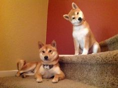 Guards of stairs