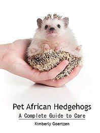 South Floridas Top Notch Hedgehogs of Miami   Erizos Africanos