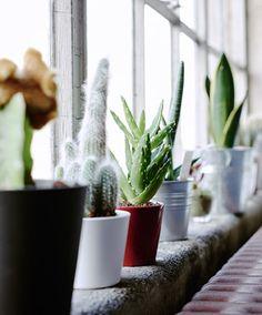 Grow a windowsill garden