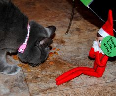 Elf On The Shelf -- Cat trap! (Click on picture to see more great Elf On The Shelf ideas!)