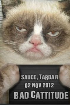 Grumpy cat...this is the real Grumpy Cat...seems he should be a he...but she's a she & they call her Tard for short. She's about a year old