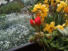 Pergola, Garden, Plants, Garten, Outdoor Pergola, Lawn And Garden, Gardens, Plant, Gardening