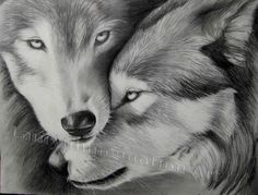 inspirational drawings of wolves | two-wolves-watermarked