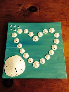 Sand Dollar Shadow Box From Small To Larger Sand