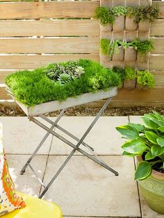 This metal table, originally intended for serving drinks sofa-side, now overflows with Irish moss and succulents on the patio. #upcycle