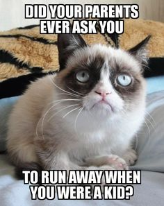 """""""Cats are funny. Grumpy cats are insane."""" Grumpy cats are serious and funny. Funny memes featuring grumpy cats have been curated in one place. Funny cat memes for leisure. Grumpy Cat Quotes, Funny Grumpy Cat Memes, Cat Jokes, Funny Animal Jokes, Cute Funny Animals, Animal Memes, Funny Cats, Funny Jokes, Angry Cat Memes"""