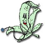 Should marijuana be a medical option?: Did You Know? Little Known Facts in the Medical Marijuana Debate