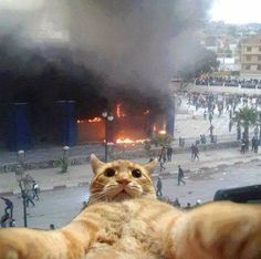 I See the Fire Trucks, but First . . . a Selfie